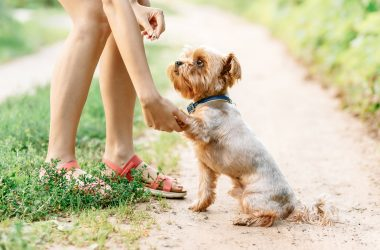 How to Teach Your Dog Commands