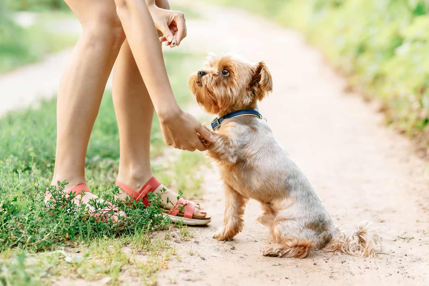 How to Teach Your Dog Commands Using Positive Reinforcement