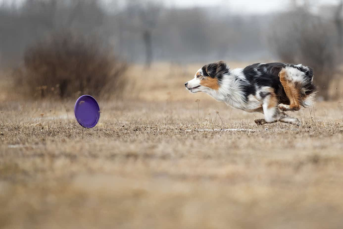 How to Teach a Dog to Catch