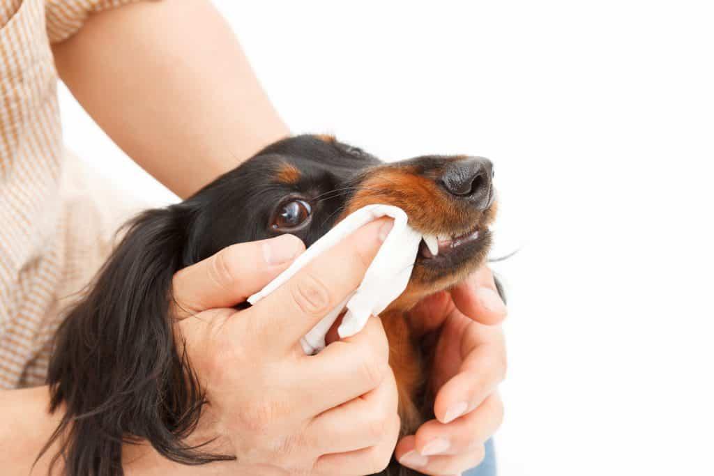 dog wipe