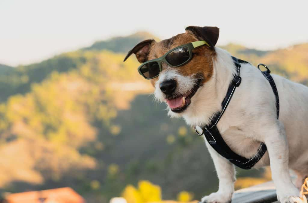 Dog wearing