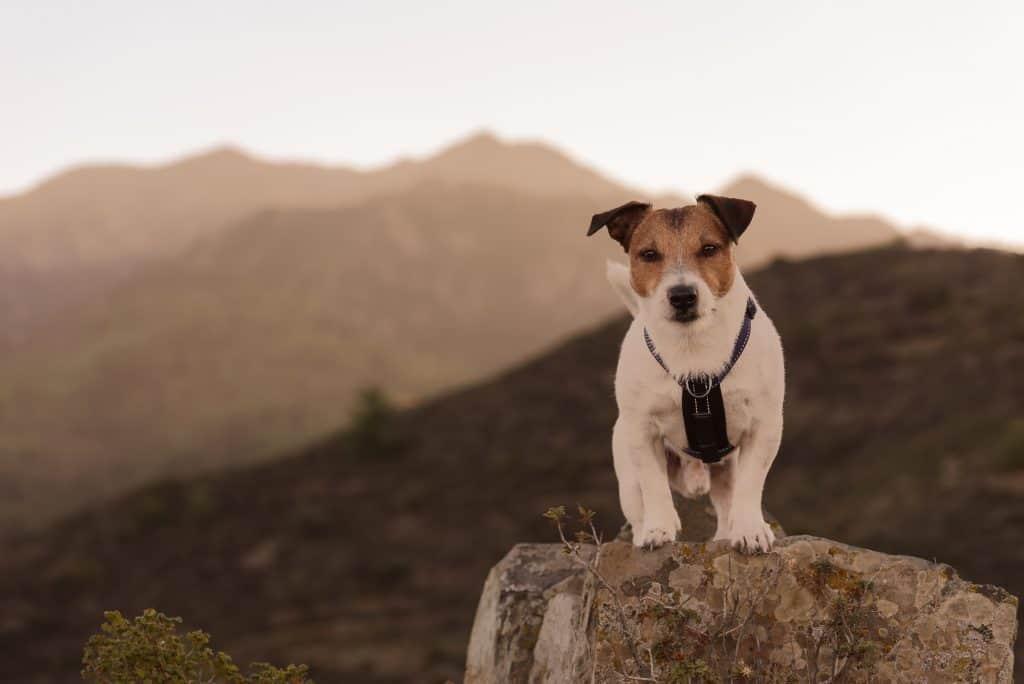 Dog standing