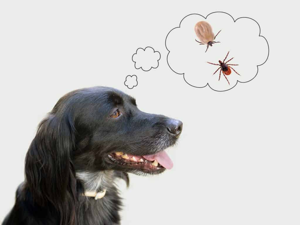 Dog considering health