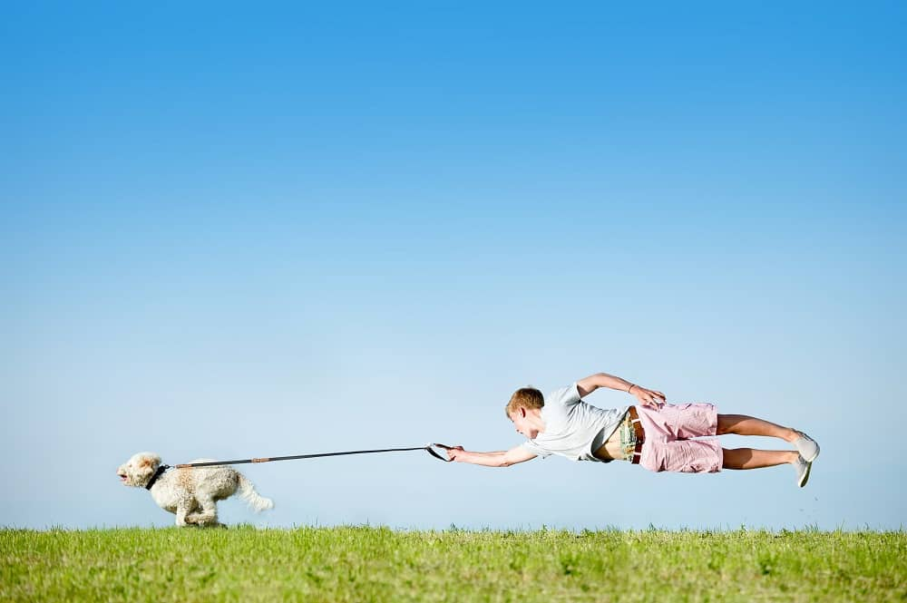 Hund an Leine
